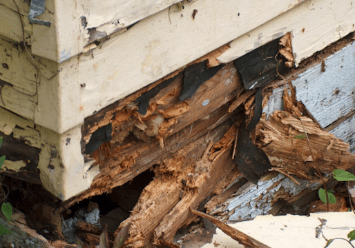Wood Rot Carpentry